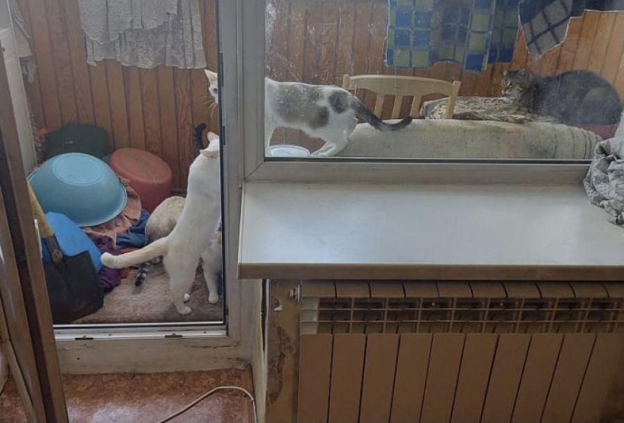 Еще одна добрая душа: пенсионерка из Бийска набрала 12 кошечек