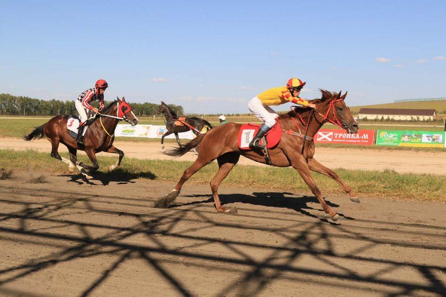 Лучшие лошади Сибири стали участниками скачек «Большого Сибирского круга»