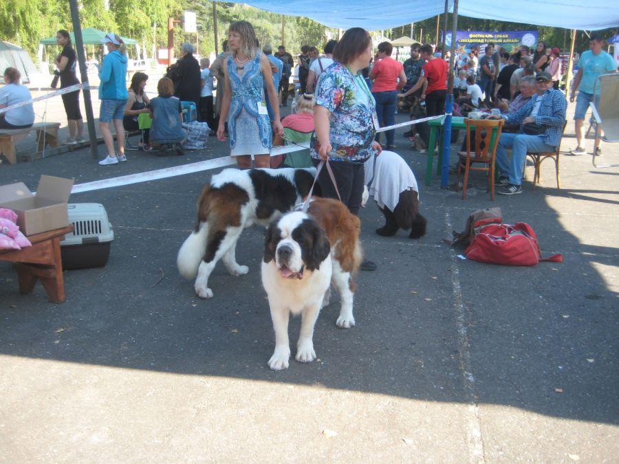 Друг в беде не бросит: на Алтае прошел фестиваль для собак и их хозяев
