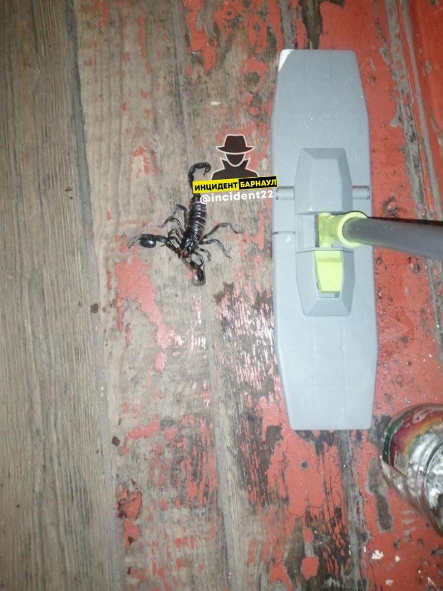 В подъезде жилого дома в Алтайском крае обнаружили чёрного скорпиона