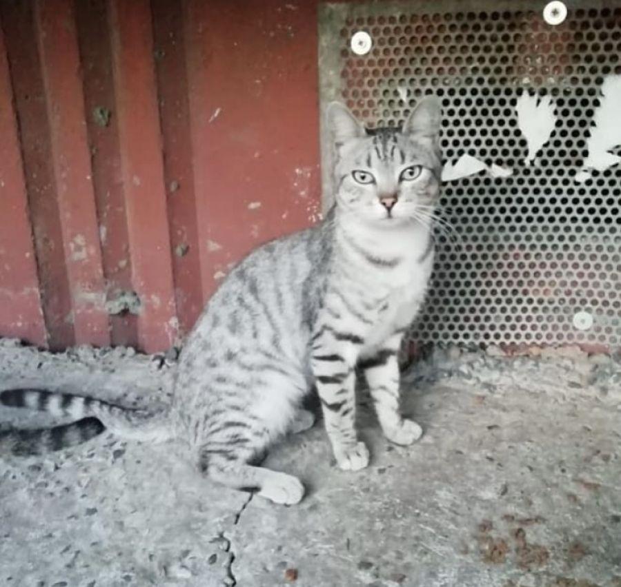 Плохая новость для кошек: бийчане переживают за «подвальных» жильцов