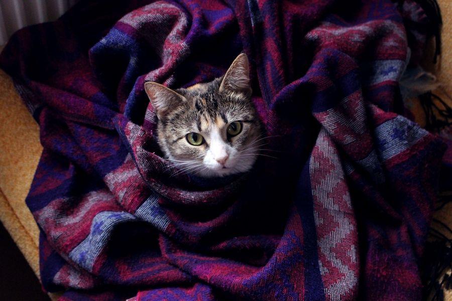 Берегите тепло: как согреться дома, пока не включили отопление