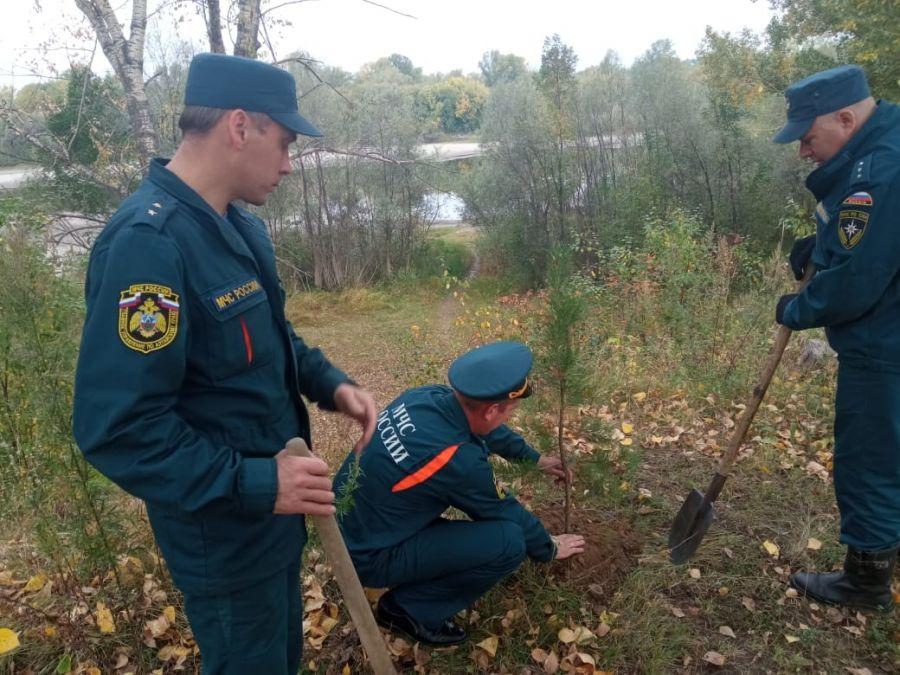 Бийские пожарные убрались на берегах Бии и посадили саженцы в парках