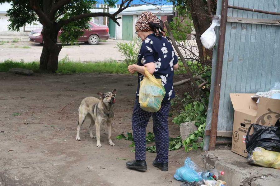 Спасибо «кормилицам»: почему в Бийске не решается проблема бродячих собак