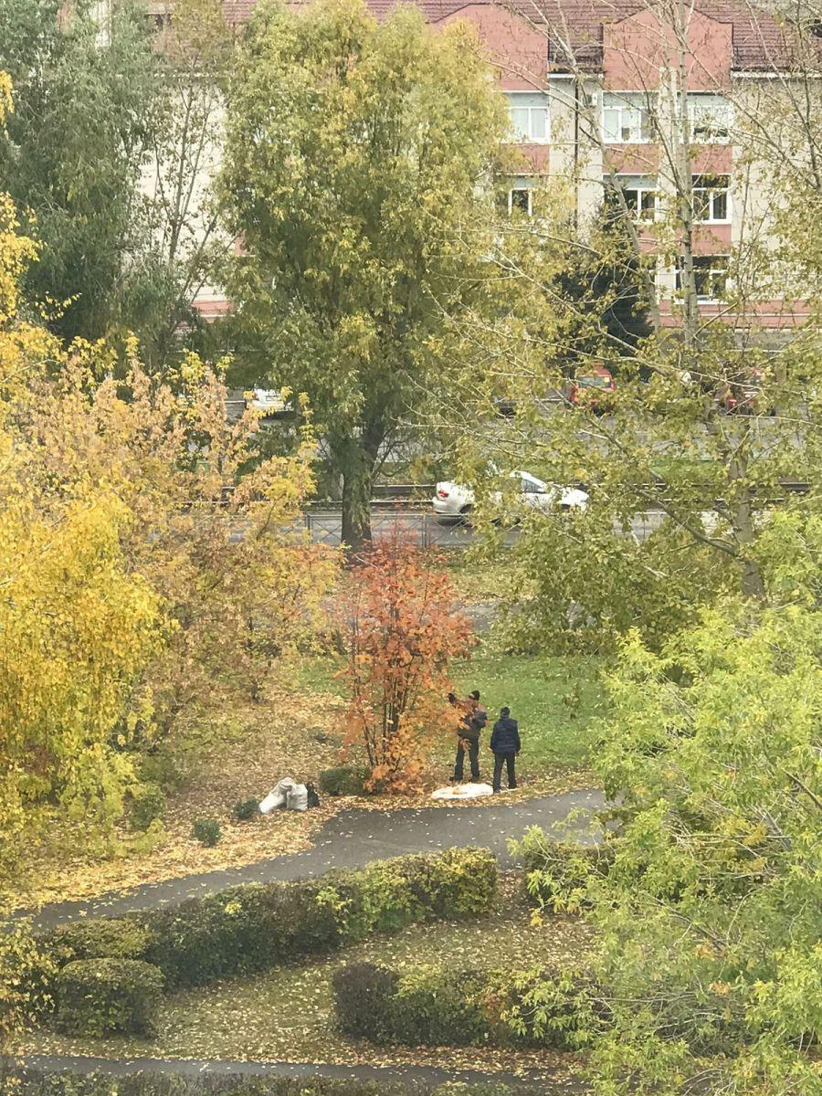 Бийчане собирают рябину в городских парках.